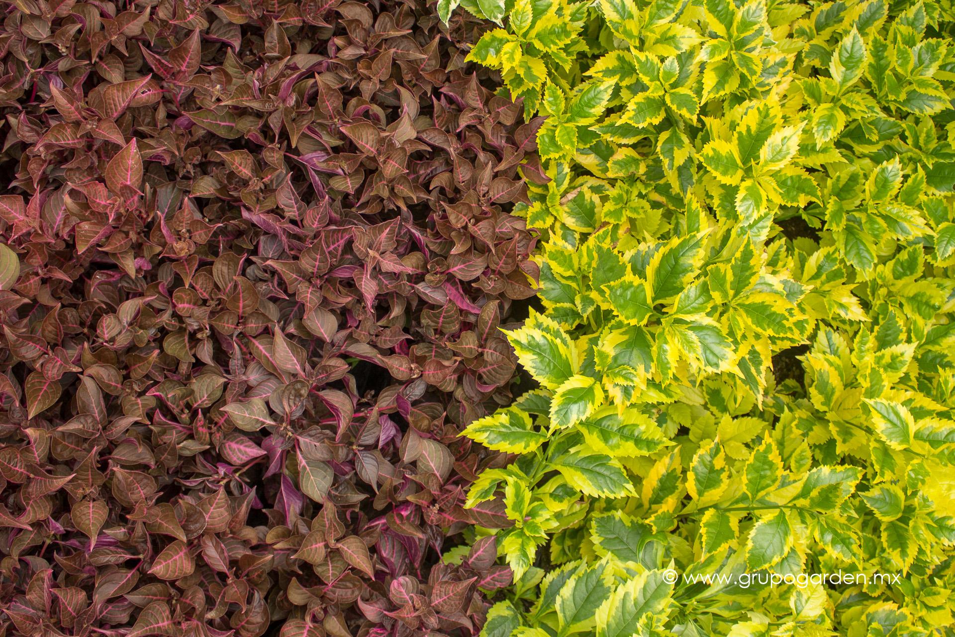 Viveros grupo garden for Viveros de plantas de ornato