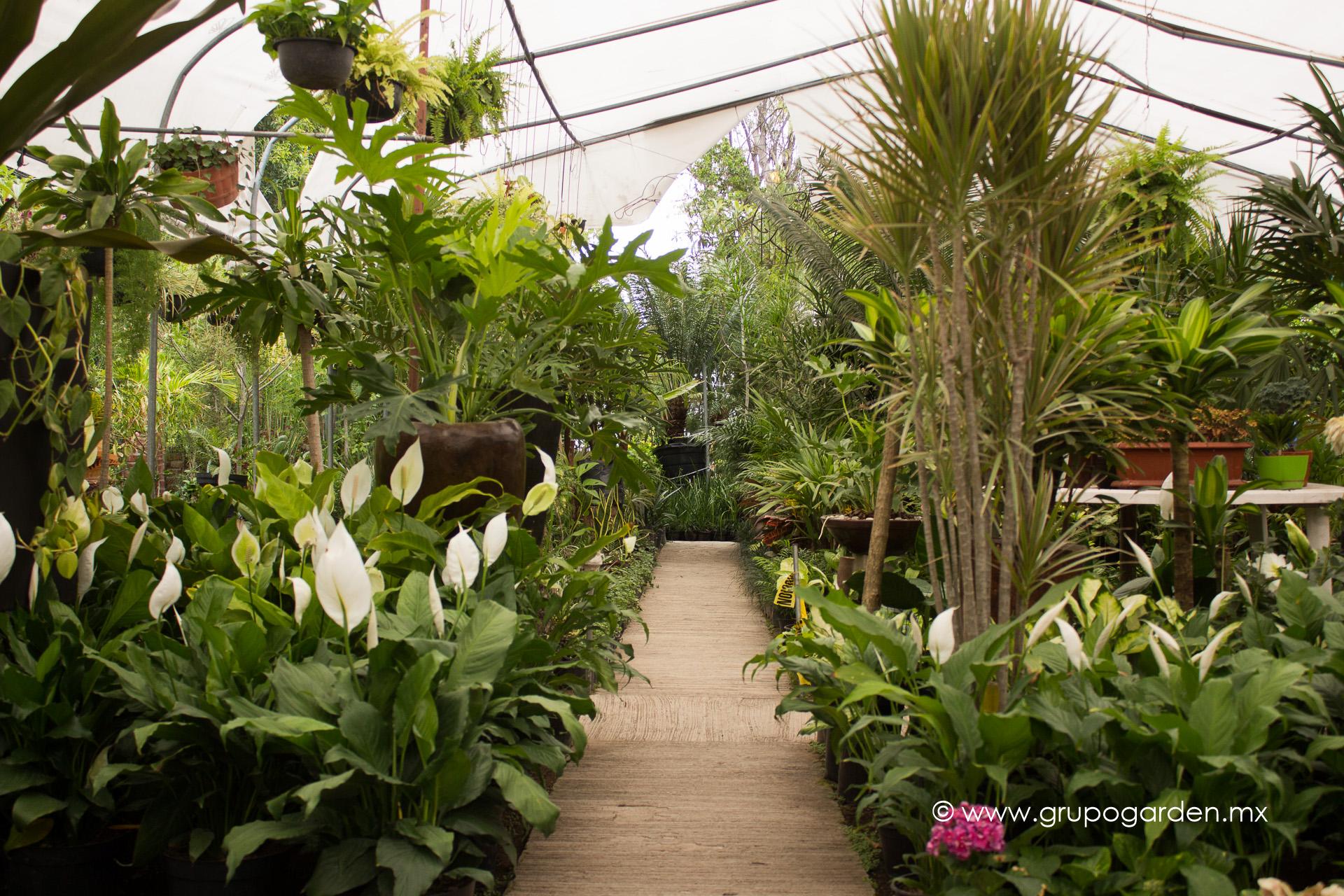 124 variedad de plantas de ornato praderasdeagua otras for Viveros de plantas de ornato