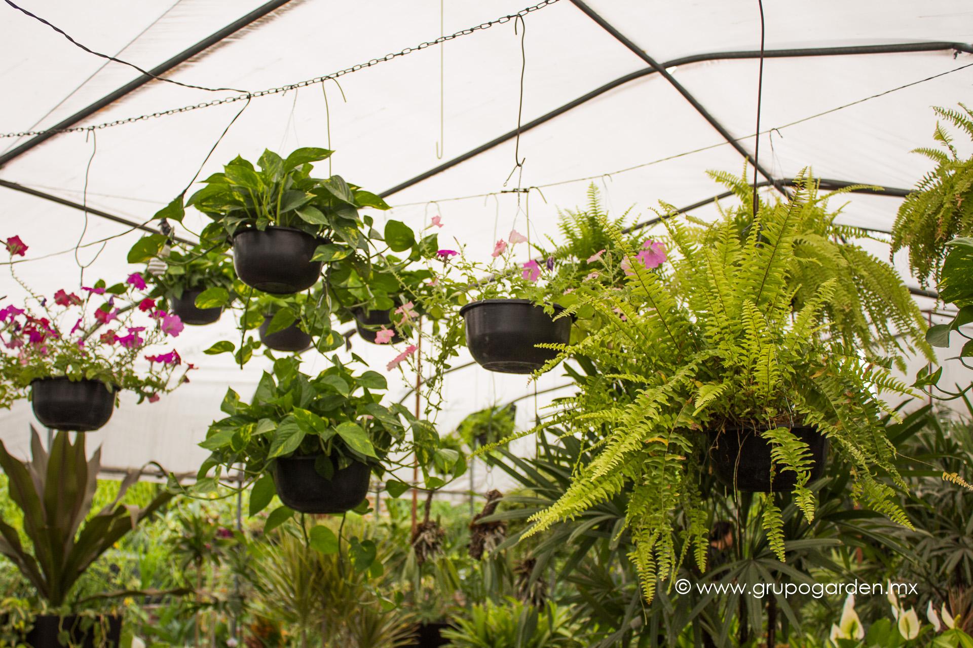 Viveros grupo garden for Viveros frutales
